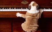 ピアノサークル *Klangfarbe*