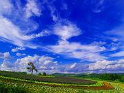 雲を眺める会