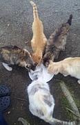 水戸・偕楽園のネコが好き!