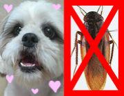 動物好き虫嫌い