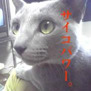 猫の超能力。
