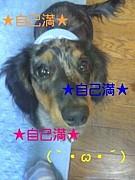 自己満(`・ω・´)