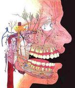 頭痛 群発 群発頭痛の原因・対処法など |
