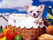 Dogcity【犬好きが集まるSNS】