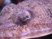捕獲した魚の写真&図鑑