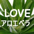 LOVEアロエベラ