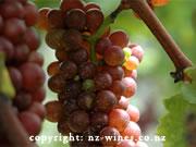 ニュージーランドワイン友の会