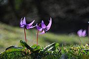 野の花を美しく撮ろう