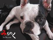 みちのくフレブル.com