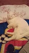 猫友になろぉ〜よ(*^□^*)