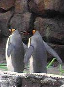 ペンギンが好きです