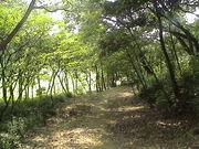 自然派〜森が大好き〜