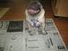 ペットの新聞を創る会 香川県