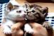 つくねとわかめの猫もあい