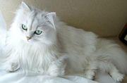 猫について語りましょう!