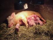 家畜繁殖学研究室 「繁殖の杜」
