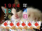 1984年12月26日生まれ