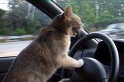 車の中で熱唱してしまう