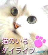猫のいるゲイライフ