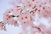 桜が丘中学校 第12回生