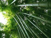 a million bamboo
