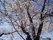 4月5日(日)の有楽町de集い