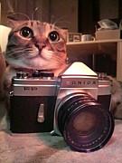 ☆フィルムカメラで ねこ写真部