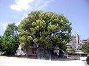 福岡市立那珂南小学校