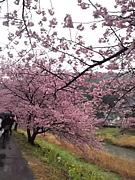 2010伊豆 冬2