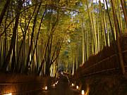 そうだ、京都に行こう(電電)