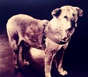 SHIBUYA 忠犬ハチ公を愛でる