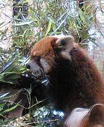 日本熊猫協会(通称パンダの会)