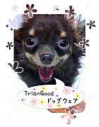 TrianGood_愛犬家オーダーメイド