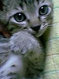 ウチの猫がカワユスな件について