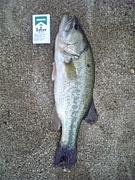 LB3 釣り部