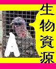 名城大学 06056Aクラス