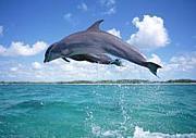 TEAM海豚番長