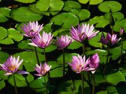 Secret garden of Beauty