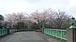 桜プロジェクト FTU