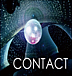 ◆ CONTACT ◆