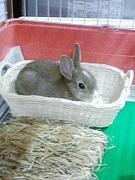 沖縄在住でウサギ大好きさん集合