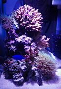 小型水槽で海水魚!