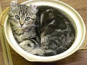 Tea & Cat Project.
