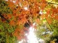 春.夏.秋.冬. 季節のにおい
