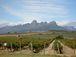 Cape Wine 南アワイン