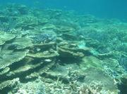 西オーストラリアの海