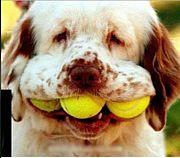 東京でテニスがしたいです。