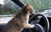 運転が下手