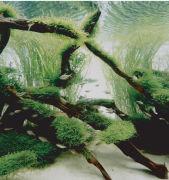 熱帯魚・水草マニュアル