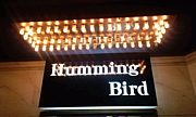 ★Humming Bird★